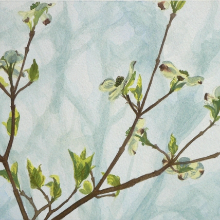 "dogwood two, 2012; watercolor on paper; 9"" x 6 3/4"""