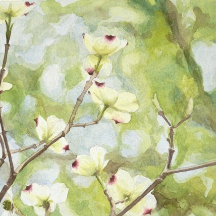 "dogwood one, 2012; watercolor on paper; 9"" x 6 3/4"""