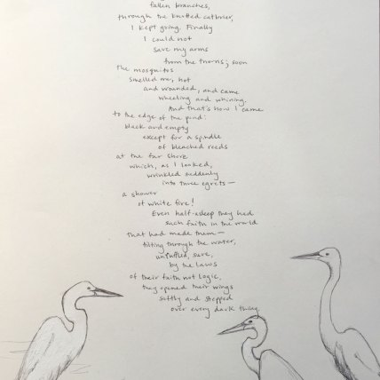Egrets by Mary Oliver || Illustration by Bonnie Veblen