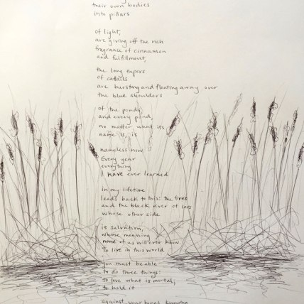 """""""In Blackwater Woods"""" by Mary Oliver 
