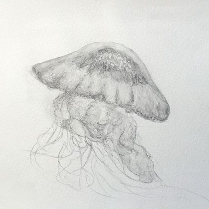 """jellyfish study 
