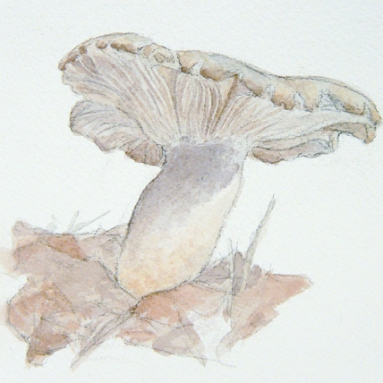 "mushroom study, 2009; watercolor on paper; 4"" x 4"""
