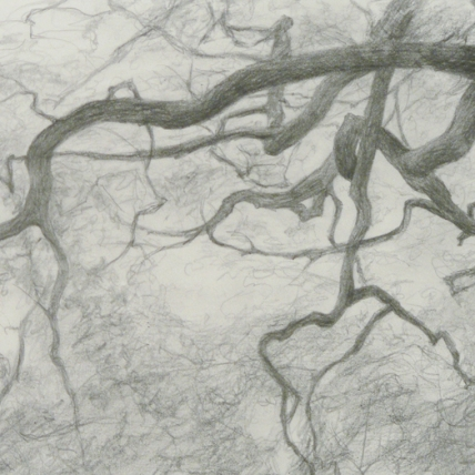 """branches study 