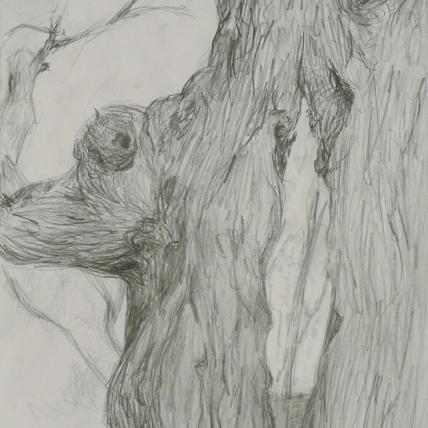 "split tree study || 2009 || graphite on paper || 18 x 24"""