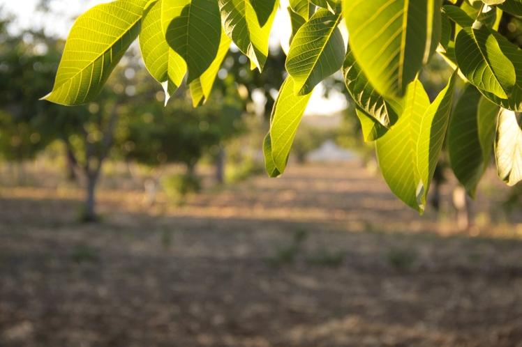 walnut grid