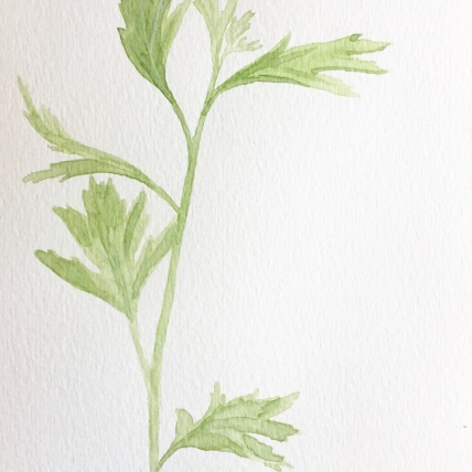 """lovage"", watercolor on paper, 2018, 6""x8"""