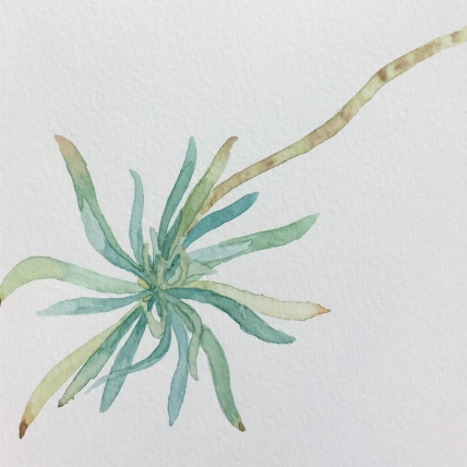 """euphorbium"", watercolor on paper, 2018, 6""x6"""