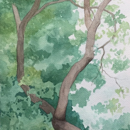 """circling oak"", watercolor on paper, 2018, 7""x12"""